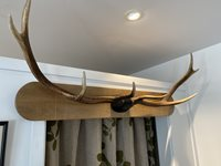 Deer Antler Coat-rack